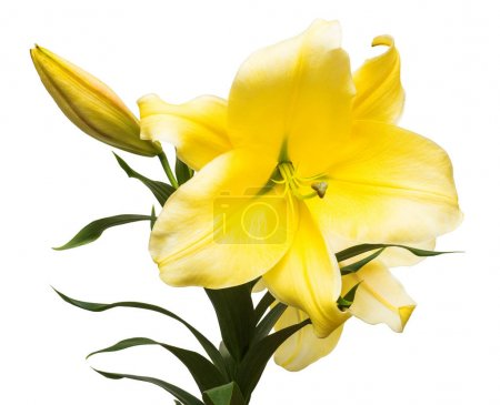 branch of yellow lilies