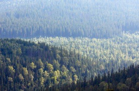 Photo pour Été Syvulja versant de montagne avec forêt. Vue depuis le sommet du mont Ihrovets, Gorgany, Ukraine. Bonne nature arrière-plan . - image libre de droit