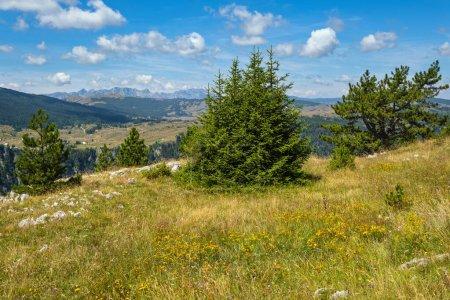 Photo pour Paysage pittoresque de montagne d'été de Tara Canyon dans le parc national de montagne Durmitor, Monténégro, Europe, Alpes dinariques des Balkans, Unesco patrimoine mondial. - image libre de droit