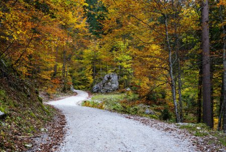 Photo for Peaceful autumn Alps mountain forest path road view. Near Gosauseen or Vorderer Gosausee lake, Upper Austria. - Royalty Free Image