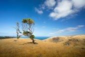 Tree on coastal hill