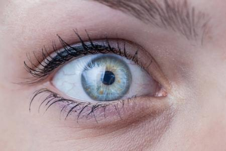 Photo for Close-up of a beautiful female blue eye - Royalty Free Image