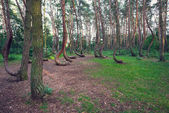 Famous Crooked Forest