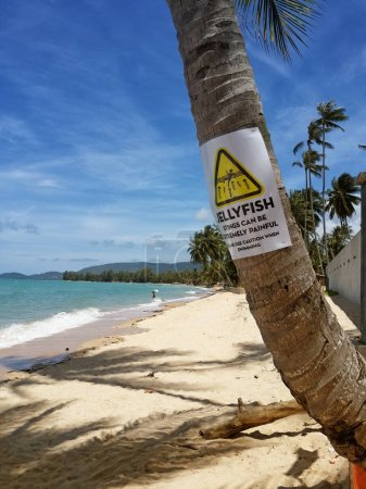 The sandy shores of the azure sea. Waves and palm tree  with a warning sign. The inscription on the palm:Jellyfish stings can be extremely painful. Please use caution when swimming. Koh Samui Thailand