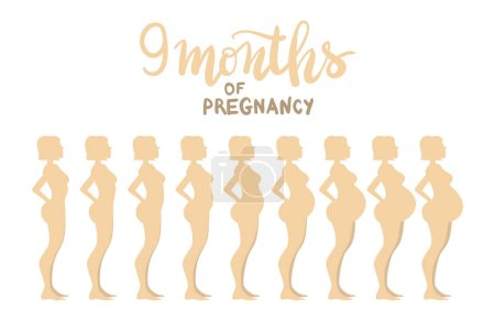 Stages of pregnancy 9 months. Woman side view. Cartoon vector il