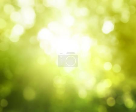 bokeh of sunny forest