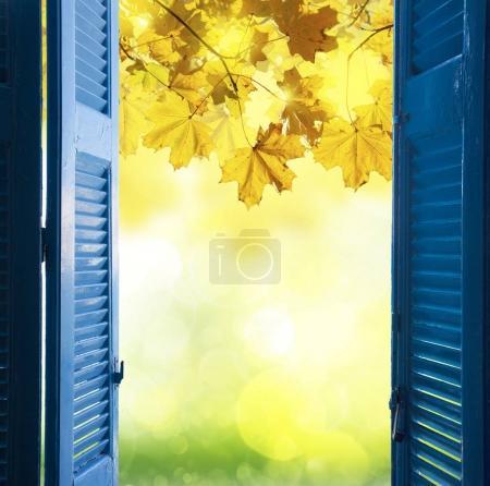 window to fall garden
