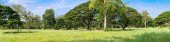 Panoramic Tropical rain forest