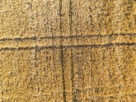Photo for Wheat field from high, aerial view - Royalty Free Image