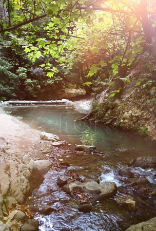Photo for Shallow stream flowing through green forest scenery, sunlight rays above - Royalty Free Image