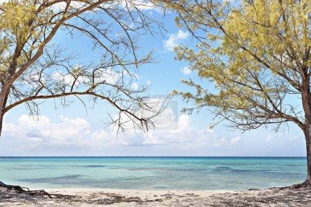 Photo pour Vue sur la mer bleu clair à travers les arbres, y compris les feuilles jaunes sur les branches, tant de sable sur la côte sous le ciel bleu avec des nuages blancs - image libre de droit