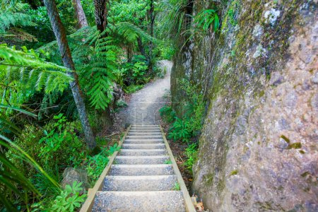 Wooden stairs of hiking track, Mount Manaia.