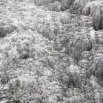 Golden Fleece Terrace is one of the major attracti...