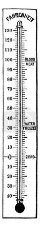 Illustration pour Thermomètre Fahrenheit à 41 degrés. Chaleur du sang, gel de l'eau, et zéro sont tous marqués sur le côté droit, il montre trois thermomètre de différentes tailles d'images en elle, dessin de ligne vintage ou gravure - image libre de droit