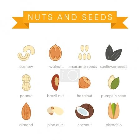 nuts ans seeds icons in flat style