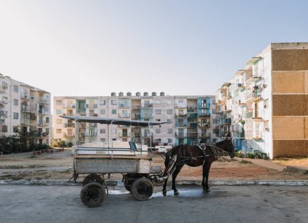horse standing with old cart with old buildings on background, Trinidad, Cuba