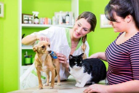 Cat and dog together at pet hairdresser