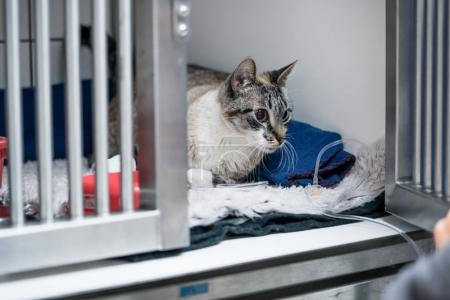 Cat in cage in veterinarian clinic