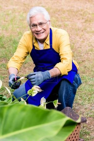 Portrait of active Asian elderly man smiling while pruning green