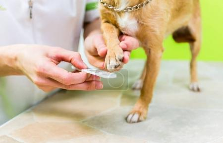 dog in dog grooming salon
