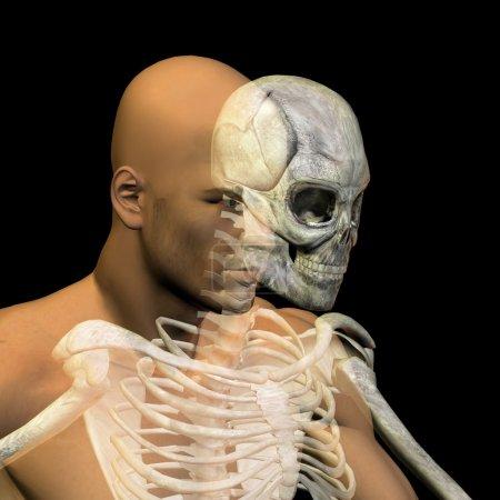 conceptual anatomy with bones