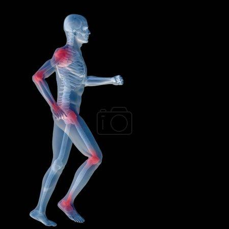 human man anatomy