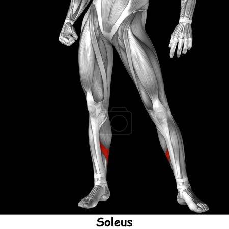 human lower legs
