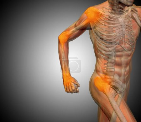 Human anatomy on gray background