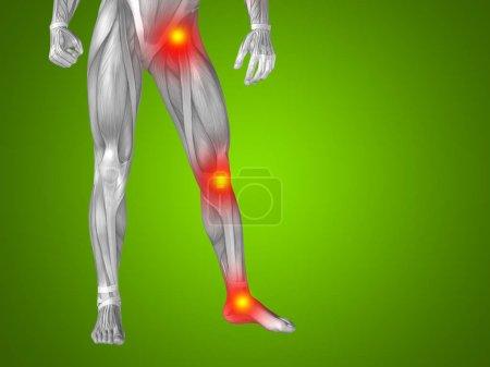 Human man anatomy lower body