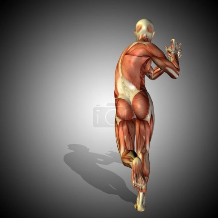 body with muscles of strong human