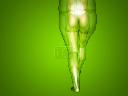 Illustration of overweight human body