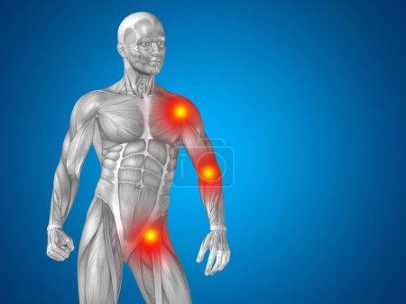 human upper body anatomy