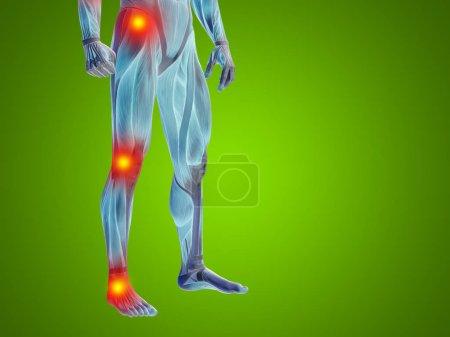 human lower body anatomy