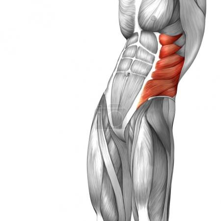Anatomical Concept 3D illustration