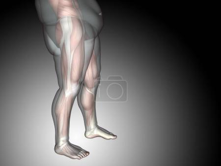 3D fat overweight vs slim fit diet