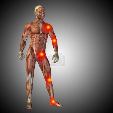 Concept of human anatomy