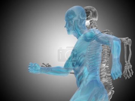 human running anatomy model