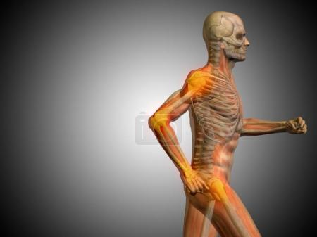 human running anatomy model