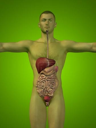 conceptual anatomical human or man