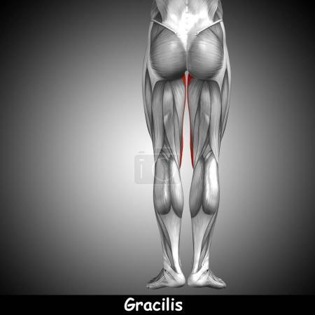 illustration fit strong front upper leg