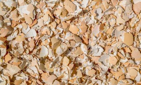 Image of crushed egg shells backgrounds