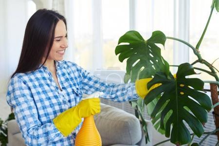 Smiling housewife splashing water on leaves of houseplant