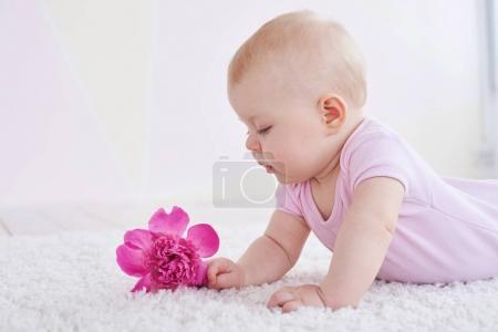 Photo pour Un cliché latéral d'un mignon petit bébé portant un costume rose allongé sur le tapis et regardant attentivement une fleur rose. Charmant gamin jouant à l'intérieur - image libre de droit