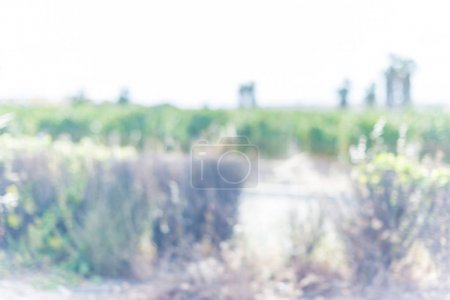 Defocused and blurred background, outdoor