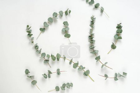 Photo for Flat lay with eucalyptus green leaves on white background, top view - Royalty Free Image