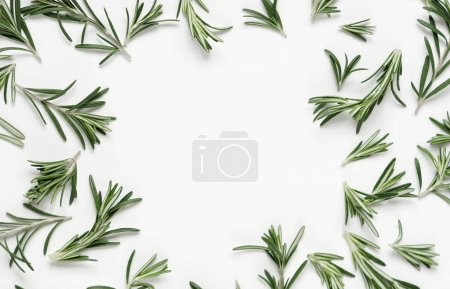 Photo for Frame of green rosemary leaves on white background, top view - Royalty Free Image