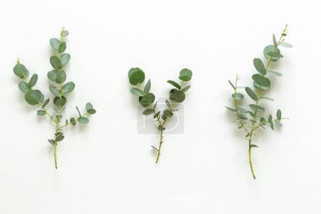Photo pour Aménagement floral créatif composé de branches d'eucalyptus sur fond blanc. Couché plat, vue du dessus - image libre de droit