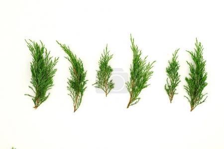 few twigs of juniper