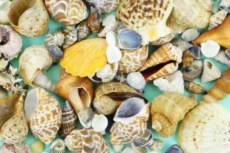 Different sea shells on a blue background. Top view. Copy space