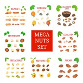 Mega nut vector set Pecans hazelnuts peanuts nutmeg almonds cashews Brazil nuts pistachio Eight different types of nuts for the packaging design of brochures about nutrition